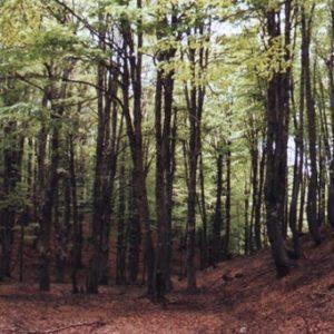 Parc national de Sila : Voyage dans le cœur vert de la Calabre