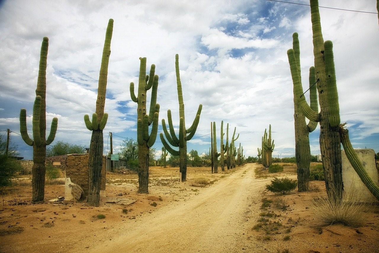 Plantes qui vivent dans le désert libyque